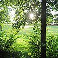 Coucher de soleil entre les feuilles.... à la grotte à jules !!!