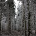2009 12 16 Sous les bois avec le givre