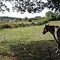 Mhère, cheval regardant église (58)