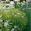 Windows-Live-Writer/Jardin_10232/DSCN0754_thumb