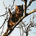 Gédéon fait l'acrobate dans le cerisier