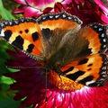 Butterfly (110)