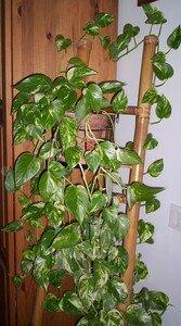 plante_armoire