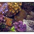 coraux14040802