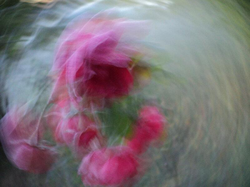 cp tourbillon de roses