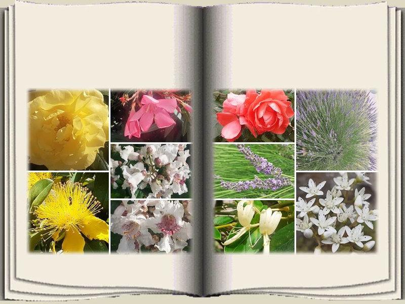 Fleurs Lylou (8)