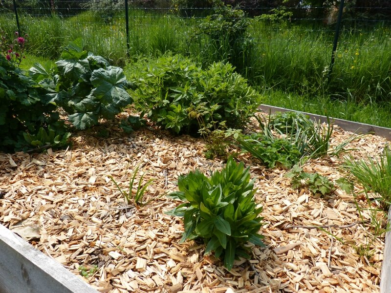 Le carré des plantes à jardin de curé