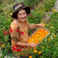 Calendula officinalis, soucis en conserves