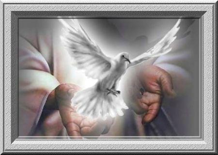 colombe-pentecote-image