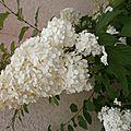 Flower power-2015 - fleur de l'été # 5