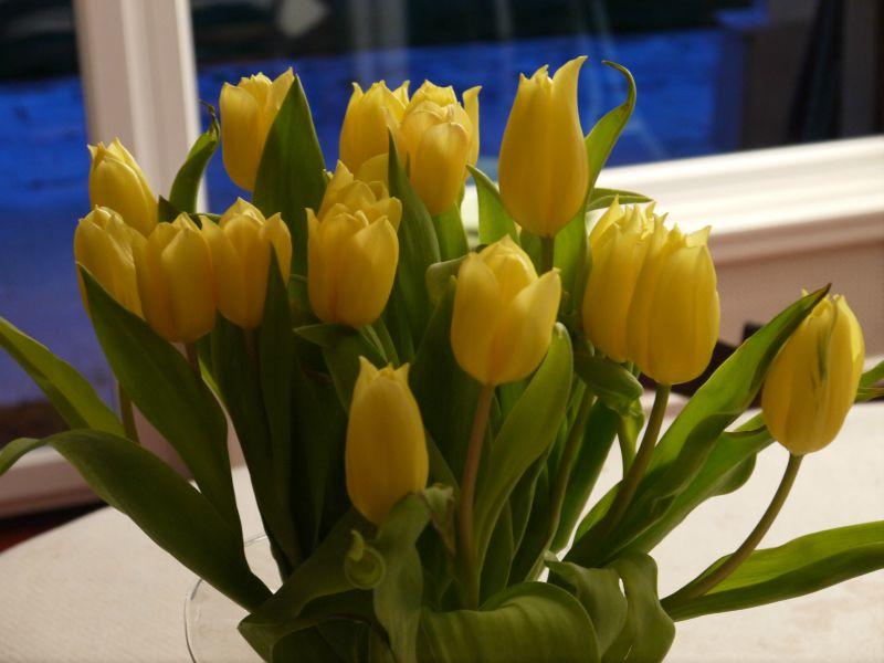 Tulipes d'avril