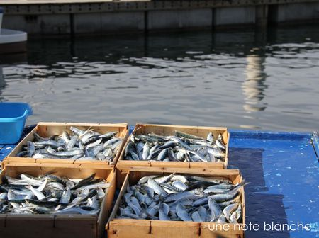 Marseille_MarchePoissons