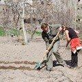 Travail dans les champs. De vraies Turkish housewives
