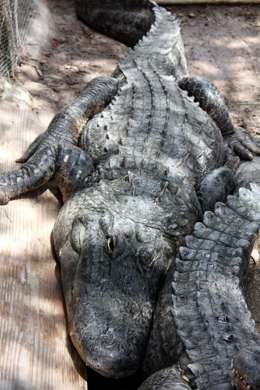 J24 - 21 juillet 2014 Everglades (184).JPG