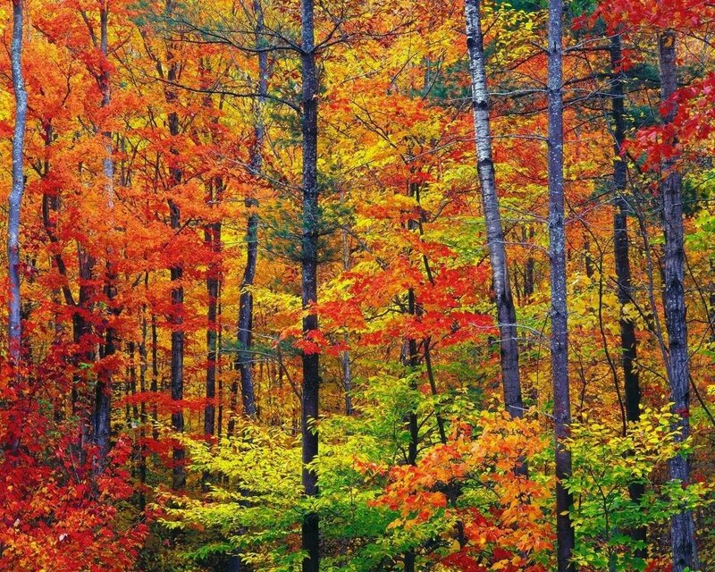 New_hampshire_colors