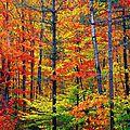 Nailstorming / l'automne