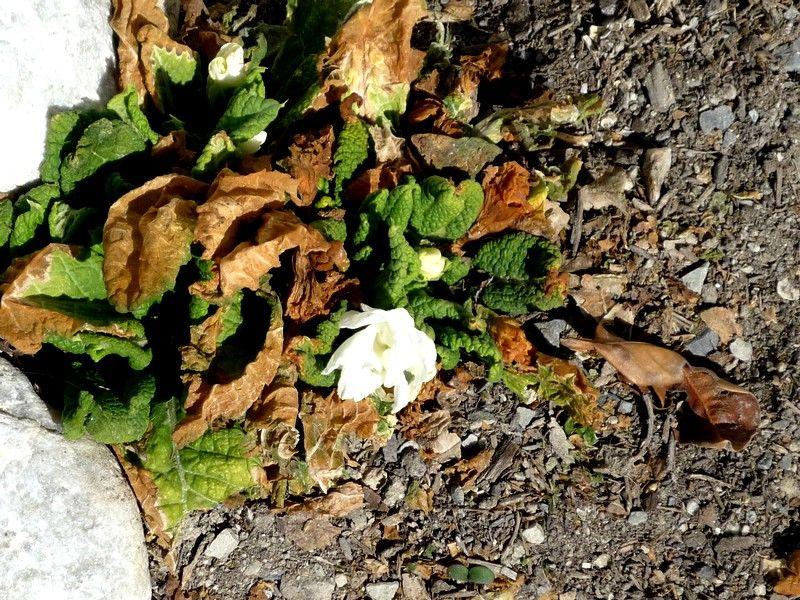 17_mars_2010_003