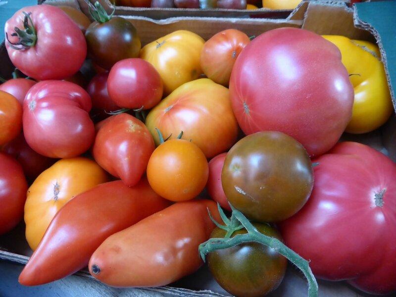 9-tomates (7)