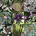 Premiere fete des plantes ...à montfort-l' amaury (yvelines 78)