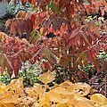 Les stars d'automne dans mon jardin