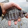 Fin des inscriptions pour le trophée rock fishing ecogear de benodet