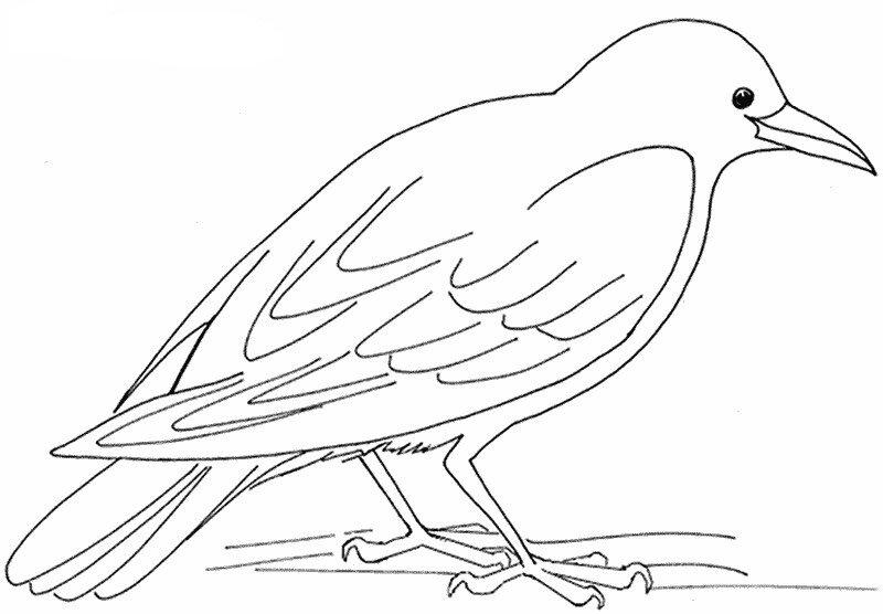 Oiseau-de-nos-bois