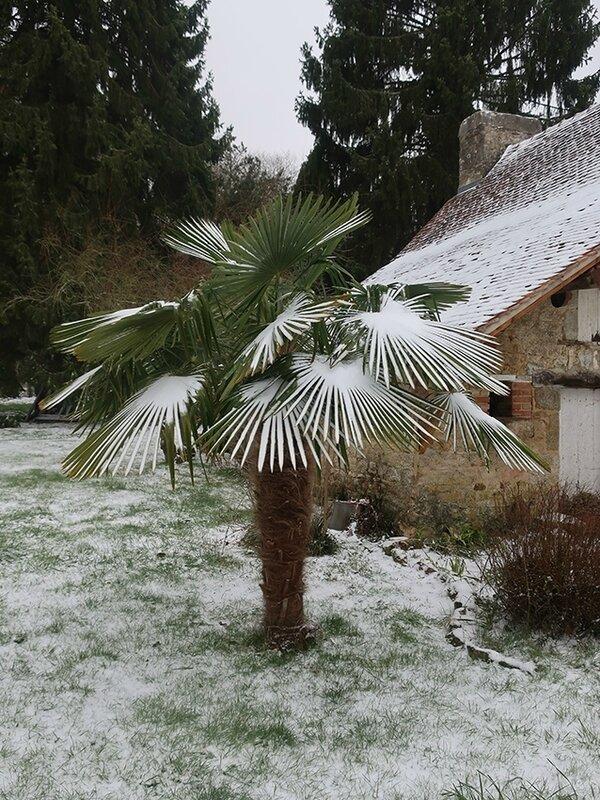 neige m