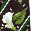 Fleur blanche sur fonds noir
