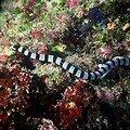 Serpent de mer mortel à la réunion !