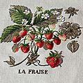 Etude botanique : la fraise