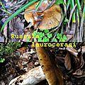 Russula laurocerasi