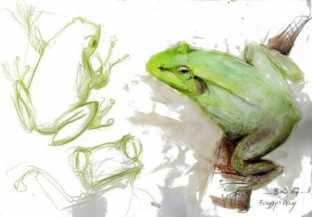frogs_day