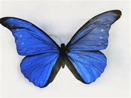 un papillon s 39 envole les p 39 tites bricoles de virginie. Black Bedroom Furniture Sets. Home Design Ideas