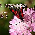 Aseggas ameggaz 2963