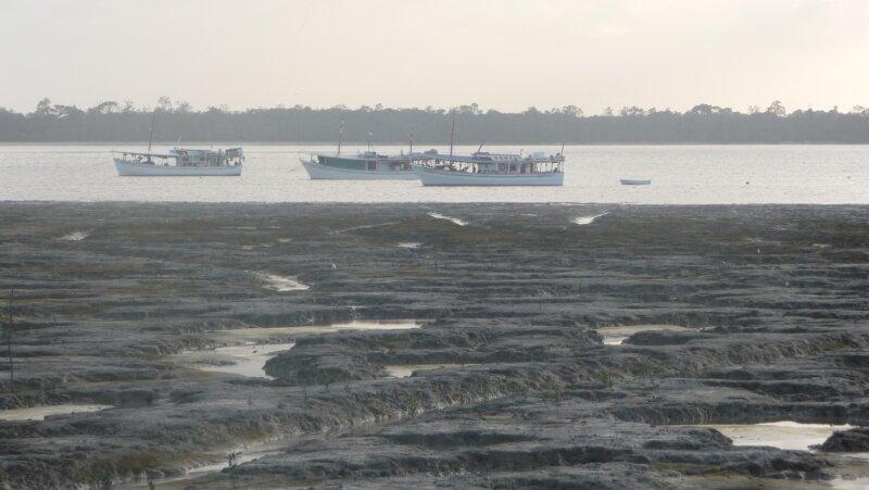 Vasière, vieux port de Cayenne