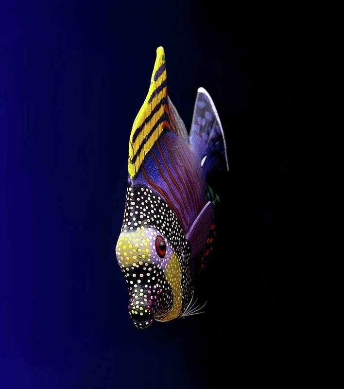 tropical_fish_pieceoflace_photography