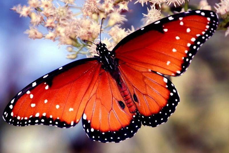 Butterfly (32)