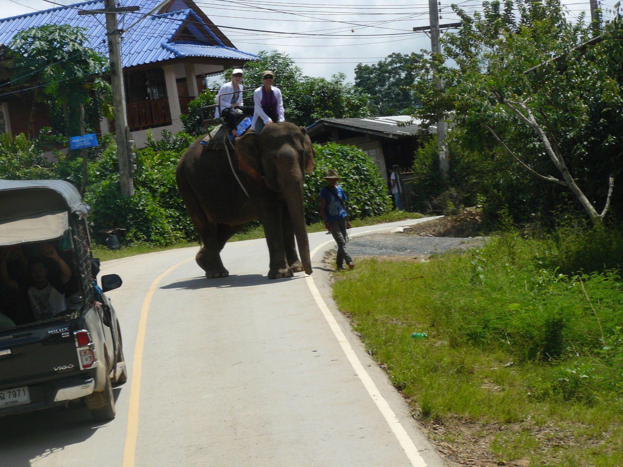 treck eleph P1190380