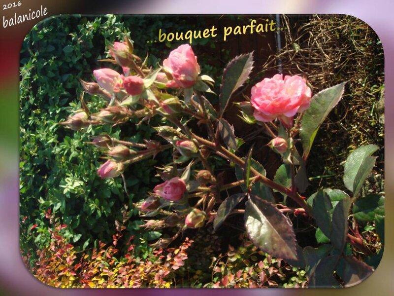 balanicole_2016_10_d'halloween à l'automne la suite_15_bouquet parfait
