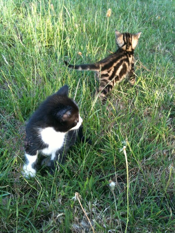 Chatons campagne