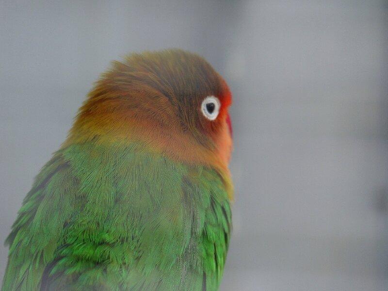 chez tropiflora les oiseaux de viviane (7)
