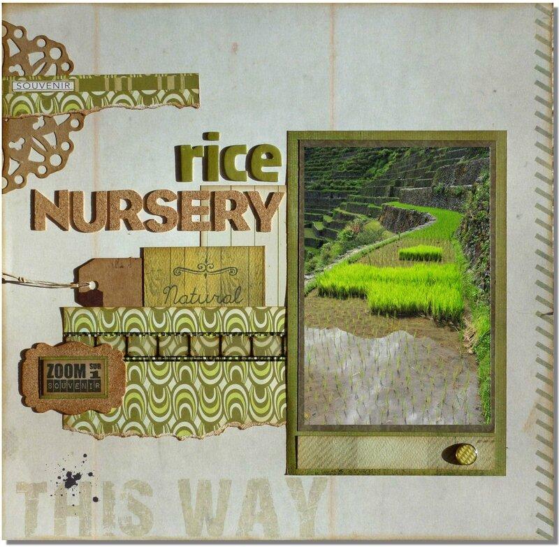 Rice-nursery1