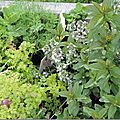 Windows-Live-Writer/Dams-mon-jardin_C73C/DSCN1345_thumb