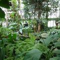 Grandes Serres Tropicaless (17)