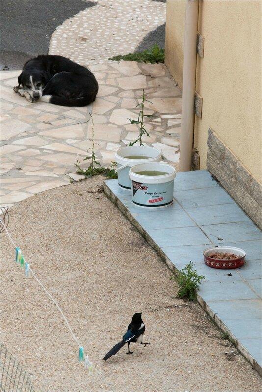 ville gamelle chiens oiseaux 020717 9 pie