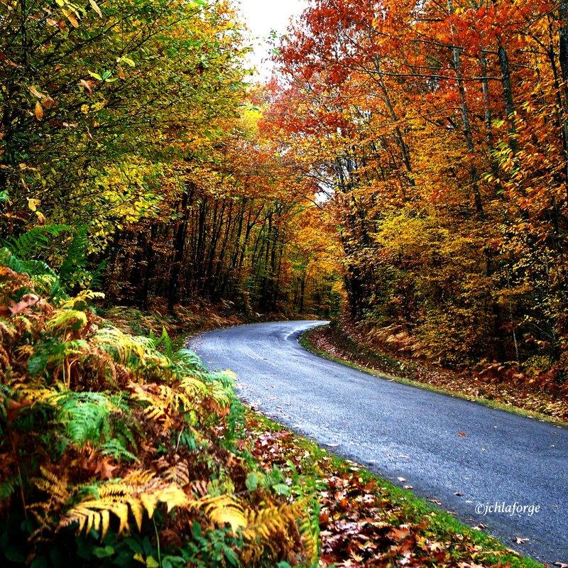 Automne_route_chabanais