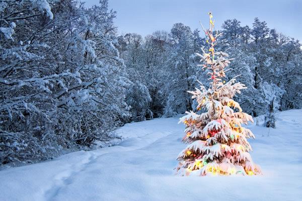 sapin_neige