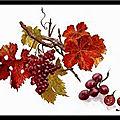 La vigne dans le sang par jean-pierre paoli - concours d'écriture de textes