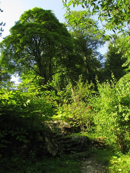 jardin alpin26