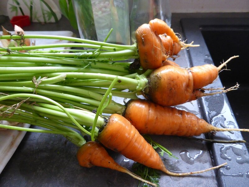 30-carottes (2)